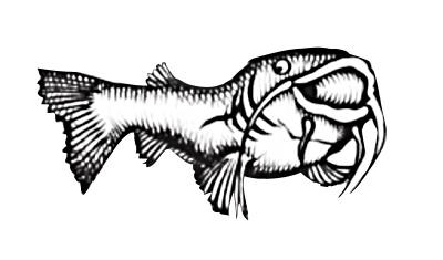 fried tilapia fish